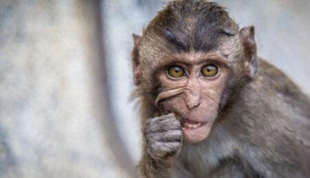 Юридические услуги - Кто желает фото с животным?